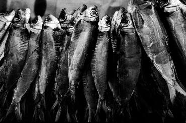 Like sardines, 2006