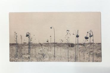 Cartes postales Flowers bloom, butterflies come