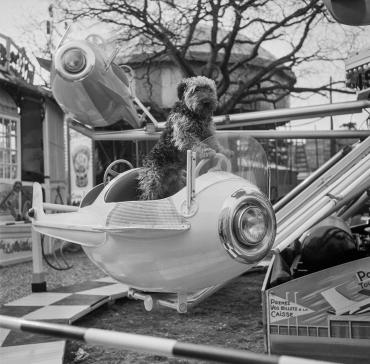 Manège canin, Paris, 1967