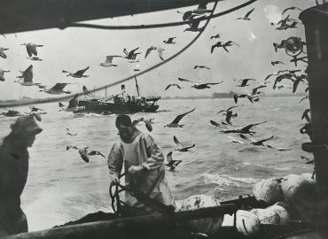 Avec les pêcheurs de harengs, France, vers 1940
