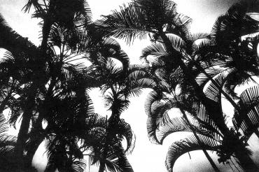 Hawaii #3