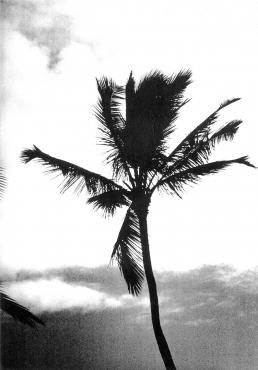 Hawaii #5
