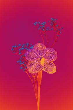 Orchidée et gypsophile, 2019 (Signé)