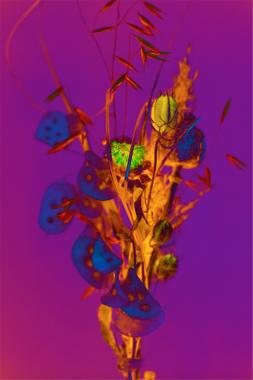 Bouquet (de pavot, monnaie du pape, nivelle de damas), 2020