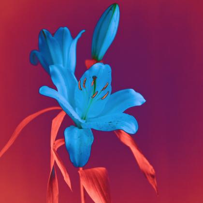 Les fleurs du paradis