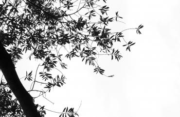Chemin de vie #4, 2014
