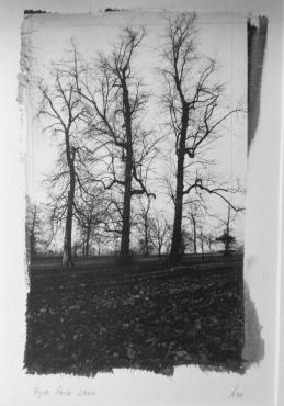 Hyde Park London II, 2000